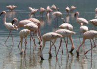 Lac Nakuru