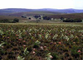 Parc national de Nyika: une fierté nationale