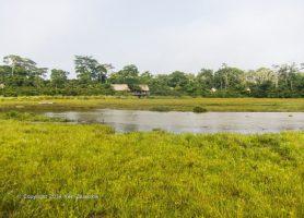 Parc National d'Odzala: le joyau du bassin congolais