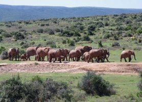 Parc national des Éléphants d'Addo: le paradis des éléphants