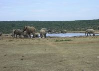 Parc national des Éléphants d'Addo