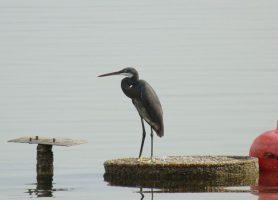 Delta du Saloum: un séjour exceptionnel à une destination unique
