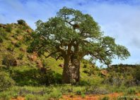 Parc national Mapungubwe