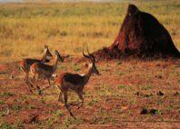 Parc national Matusadona