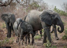 Parc national d'Arly: la fantastique échappée burkinabè