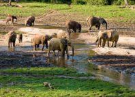 Parc national de Dzanga-Ndoki