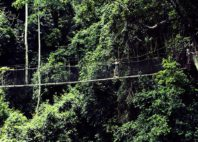 Parc national de Kakum