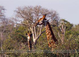 Parc national de Kisama: l'impressionnant trésor angolais