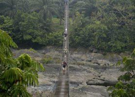 Parc national de Korup: un incontournable du Cameroun