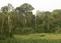 Parc national de Lobéké