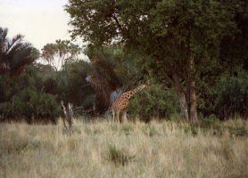 Parc national de Meru: au cœur d'une nature luxuriante