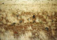 Parc national de Meru