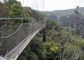 Parc national de Nyungwe: un enclos hors du commun