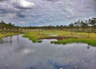 Parc national de Soomaa