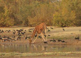 Parc national de Zakouma: une destination exceptionnelle