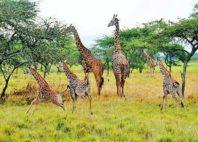 Parc national de l'Akagera