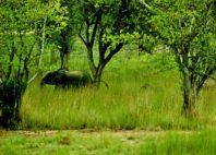 Parc national de la Comoé