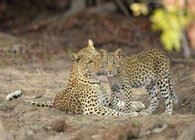 Parc national de la Kafue: un incontournable de la Zambie