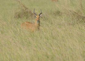 Parc national de la Kéran: une fierté nationale
