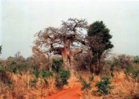 Parc national de la Pendjari