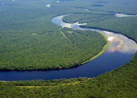 Parc national de la Salonga: un site exceptionnel