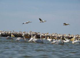 Parc national du Djoudj: le paradis des oiseaux