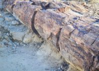 Forêt pétrifiée du Damaraland