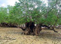 Réserve Naturelle de Lokobe