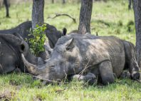 Réserve de rhinocéros de Ziwa