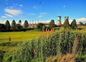 Soweto: la banlieue au passé douloureux