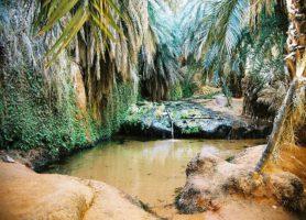 Tergit: une végétation remarquable au cœur d'un immense désert