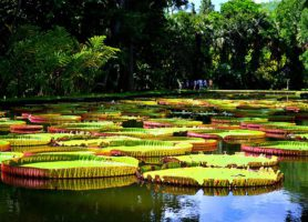 Jardin de Pamplemousses: découvrez une œuvre d'art verte