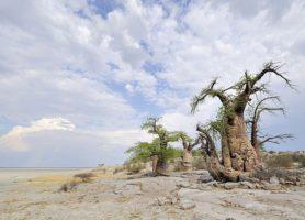île de Kubu: de l'expérience incroyable aux souvenirs oubliables!