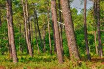 Parc Naturel des landes
